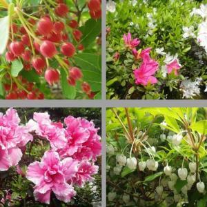 花芽がいっぱい。。。