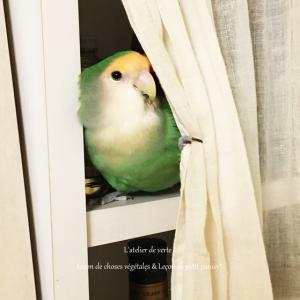 小鳥と暮らす Vol,4