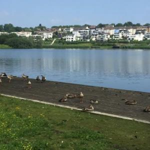 人工の湖とエジプト雁