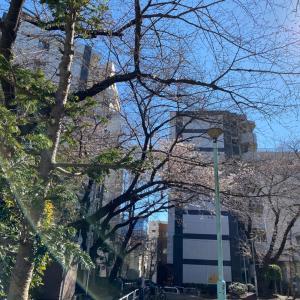 2020年3月20日に撮影したオニ公園の桜です。