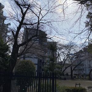 オニ公園の桜