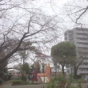 2019年3月23日、早朝のオニ公園の桜(立川)