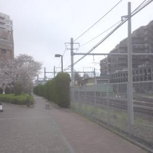 西国立駅、桜が咲いてきました。