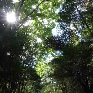 ☆木漏れ日が暖かい季節になりました