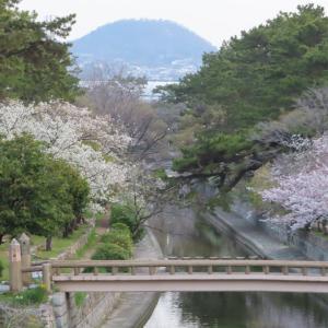桜ふたり占め