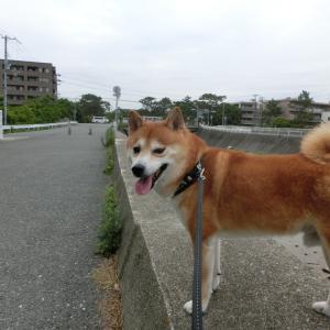カッリカリ♪【動画あり】