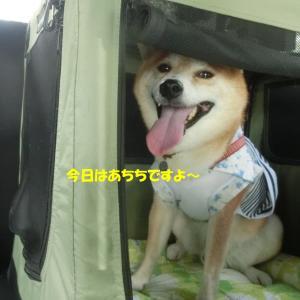 奈良の都へ