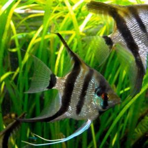 熱帯魚の中の熱帯魚