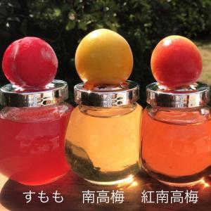 スモモ+梅=美味