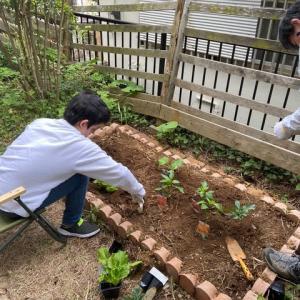 おうち時間:畑作り