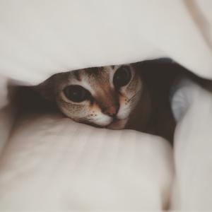 寝起きから可愛い