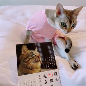 『猫が30歳まで生きる日』
