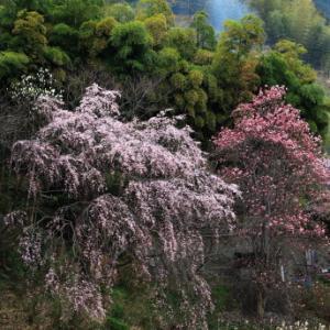 ~ 里山の春 ~