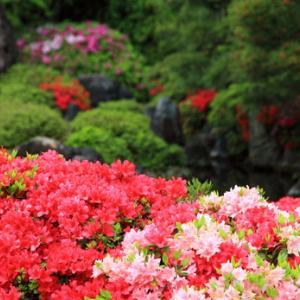 ~ 春の神苑 ~