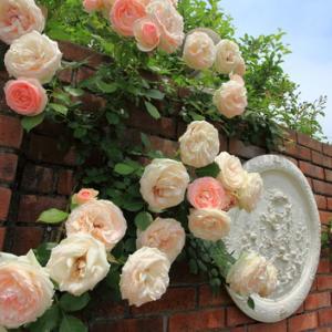 ~ Rose Garden ~