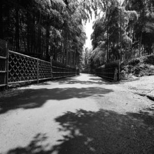 ~ 竹の径 ~