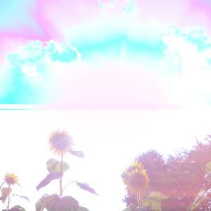 太陽と向日葵☆