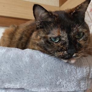 猫の女王ふたたび