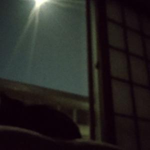 中秋の名月…あっ日にち過ぎてしまった