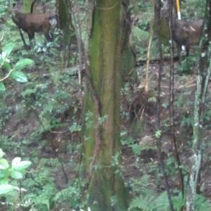 8月8日 ここ最近野生の鹿も、、