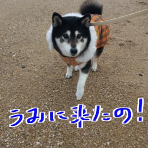 じじん歩GOGO