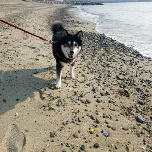 お休みの日は砂浜トレーニング