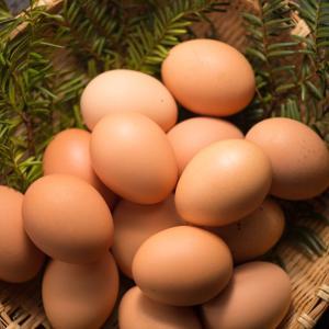 校庭で鳥の巣に入った卵を見つけ一個だけ取って担任に見せた