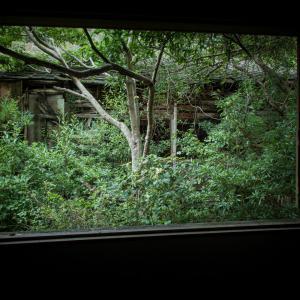 どうしても眠れず、2階の自分の部屋から窓を開けてぼうっと外を眺めていた。