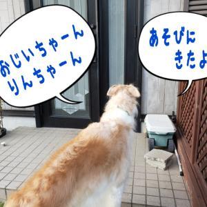 入れてくれよぉ~( ・ε・)