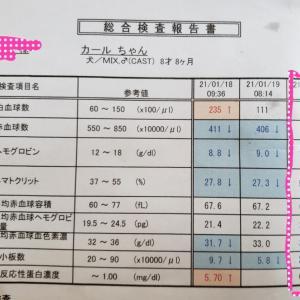 血液検査の結果\(^^)/