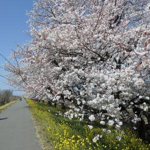 すっかり桜も散りましたよ・・・熊谷に春を告げるイベントを振り返る