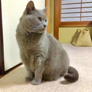 〓️お誕生日 ヴィオラちゃん6歳になりました〓️