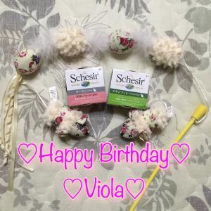 2月6日 ヴィオラちゃん5歳になりました