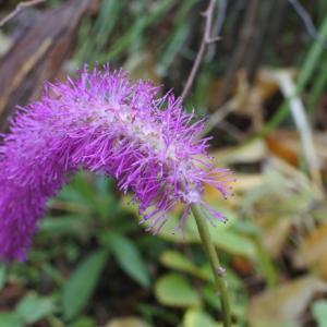 季節外れの花たち