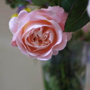 愛おしいバラ