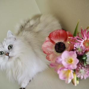 猫の日写真&素敵便♪