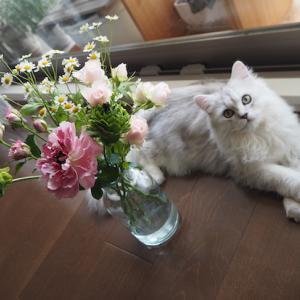お花とニャンコ、美味しい!素敵便&夫、献血