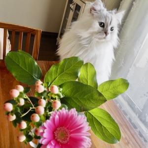 お花、お茶タイム、ニャンズのおやつタイム