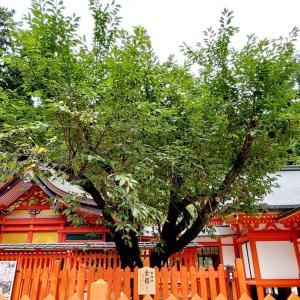 金櫻神社【参の巻】