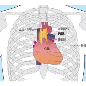 免疫アップ法【胸腺たたき】