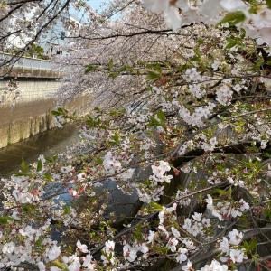 この週末なら、まだ間に合う!桜を可愛く撮る方法