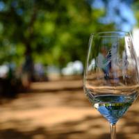 南アフリカ、酒の販売を再び禁止 新型コロナウイルス対策で