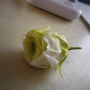 発見したら退色 行方不明になっていた花