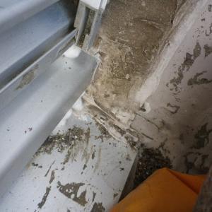 アリ、砂を積んでいた 道作り?