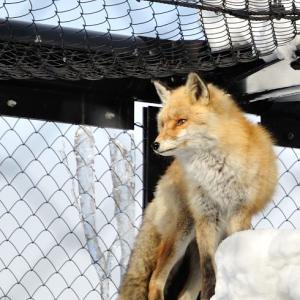旭山動物園 北海道産動物とトラ編