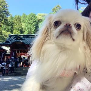 犬と箱根神社