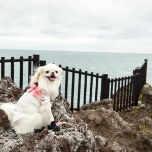 犬と城ヶ崎海岸吊り橋