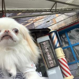 怪しい少年少女博物館【犬連れ抱っこOK】