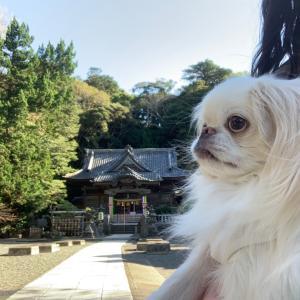 伊古奈比咩命神社通称白浜神社