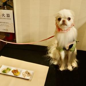 愛犬お宿③夕食